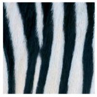 guardanapo zebra couture - 2 unid..